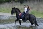 cavallo-131