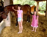 horse-tuscany