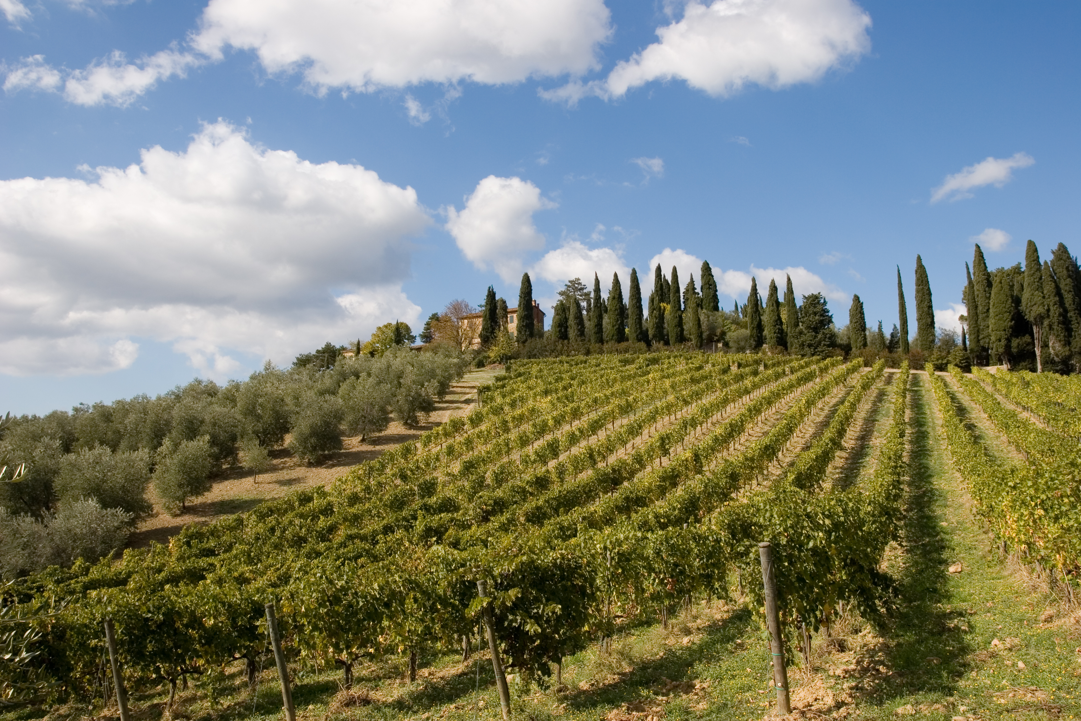 winery-tuscany