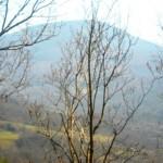 Podere Mandorli 011 vista panoramica destra