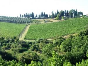 holiday_in_tuscany