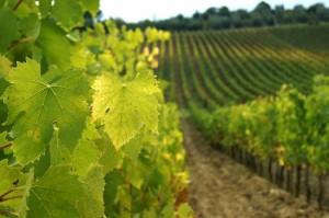 wine_tasting_tours_tuscany